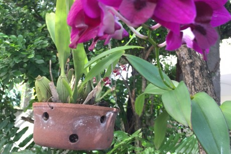 orquidea-2a